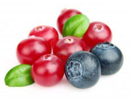 Arándanos : antioxidantes y antibacterianos