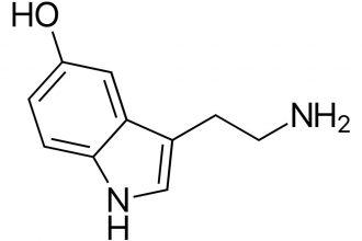 serotonina las hormonas de la felicidad